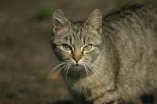Free Cat Royalty Free Stock Photos - 742698
