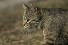 Free Cat Stock Photos - 742703