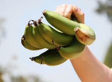 Bananas In A Hand Royalty Free Stock Photography