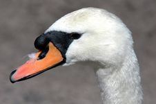 Free Bird Profile Royalty Free Stock Images - 743129