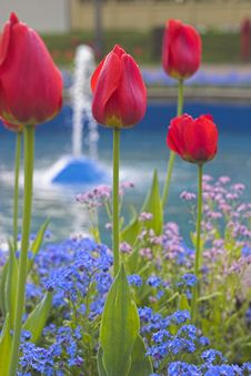 Free Tulips Royalty Free Stock Photography - 743267