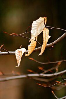 Free Dry Leaf Stock Photos - 743513