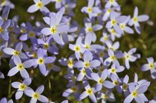 Free Purple Flowers Stock Photo - 744700