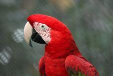 Free Parrot Stock Photo - 745330