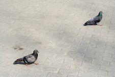 Free Two Doves. Stock Photos - 745363