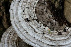Free Disk Mushrooms Stock Photos - 746223
