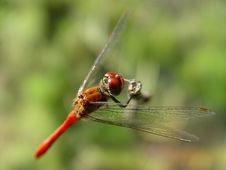 Free Dragonfly Stock Photos - 747253