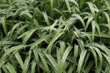 Free Fresh Green Wet Garden Royalty Free Stock Image - 748026