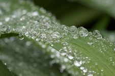 Droplets Up-close And Personal Royalty Free Stock Images