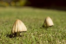 Free Wild Mushroom In The Grass Stock Photos - 748223
