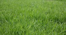 Free Bright Green Grass Background Royalty Free Stock Photography - 748317