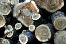 Free Wood Texture Royalty Free Stock Photography - 748787