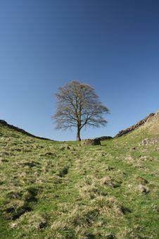 Free Hadrian Wall Royalty Free Stock Photo - 749455