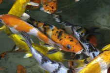 Free Fishes Royalty Free Stock Photos - 749628