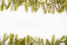 Free Pine Branches Royalty Free Stock Image - 7416926