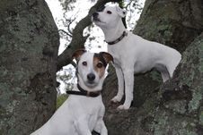 Free Two Dogs Sitting On A Tree Stock Photography - 7459362