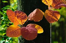 Free Bright Autumn Leaves Royalty Free Stock Photos - 7461168