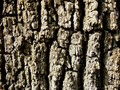 Free Close-up Of Elm Bark Royalty Free Stock Photography - 755177