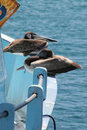 Free Birds On A Boat Royalty Free Stock Images - 759749