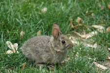Free Bunny In The Yard Royalty Free Stock Photos - 750668