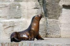 Free Seal On A Rock Stock Photos - 750713
