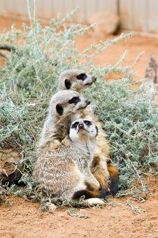 Free Terrible Threesome Royalty Free Stock Photos - 751618