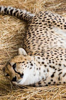 Free Don T Disturb Me Royalty Free Stock Photo - 751725