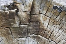 Free Texture Of Tree Rings, Macro Royalty Free Stock Photography - 752117