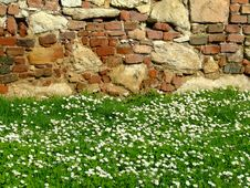 Free Daisy Field With Fortress Wall In The Background Royalty Free Stock Photo - 752615