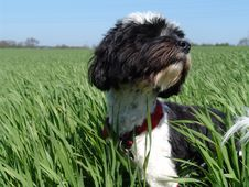 Free Dog In Field Stock Images - 752914