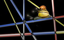 Free Two Snails On Top Of Each Other Stock Photography - 753382