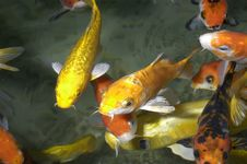 Free Group Of Fishes Stock Image - 754261