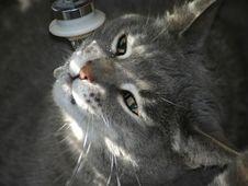 Free Thirsty Kitty Stock Photos - 754783