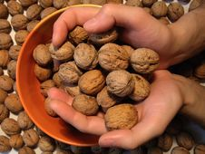 Free It Is A Lot Of Walnuts In Hands And Around Royalty Free Stock Photos - 756088