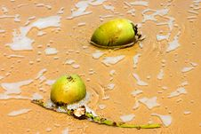 Free Coconut Surf Stock Photography - 759162