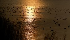 Free Golden Sunset Royalty Free Stock Photography - 759557