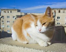 Free Cat On The Rooftop Stock Photos - 7507283