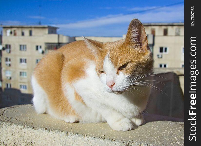 Cat on the rooftop