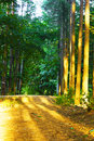 Free Road In The Forest Stock Photos - 7519613