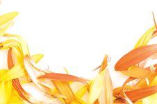 Free Beautiful Daisy Petals Stock Images - 7510574