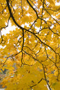 Free Yellow Leaves Stock Photos - 7527673
