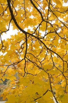 Free Yellow Leaves Stock Photos - 7527673