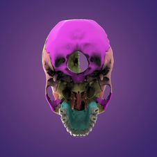 3d Rendered Illustration - Human Skull Anatomy Royalty Free Stock Image