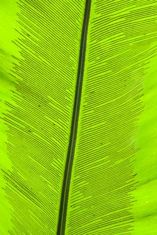 Free Tropical Green Leaf - Abstract Background Royalty Free Stock Photos - 7557138