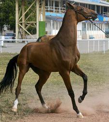 Free Stubborn Horse Stock Image - 75622021