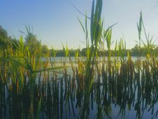 Aquatic Vegetation In The Danube Delta Royalty Free Stock Photo