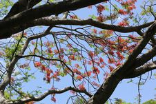 Flowering Tree On A Blue Sky Stock Photos