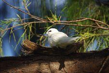 Free Exotic Bird On Nestle. Morning. Royalty Free Stock Image - 7579096