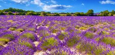Free Lavender Field In Provance Royalty Free Stock Photo - 75909745