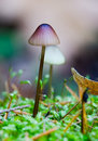 Free Fungus Royalty Free Stock Image - 762056